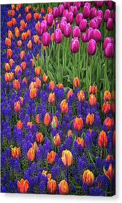 Tulips And Blue Hyacinths Canvas Print