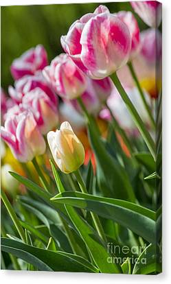 Canvas Print featuring the photograph Tulips by Angela DeFrias
