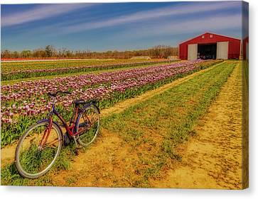 Canvas Print featuring the photograph Tulips, Bicycle And Barn by Susan Candelario