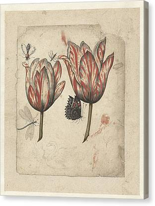 Tulips Canvas Print by Celestial Images