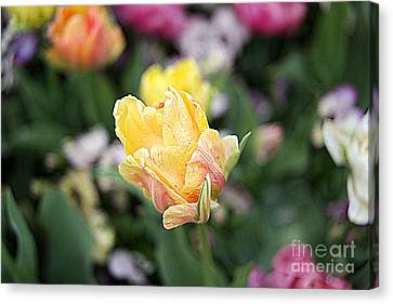 Canvas Print featuring the photograph Tulips by Diana Mary Sharpton