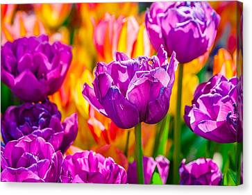 Canvas Print featuring the photograph Tulips Enchanting 41 by Alexander Senin