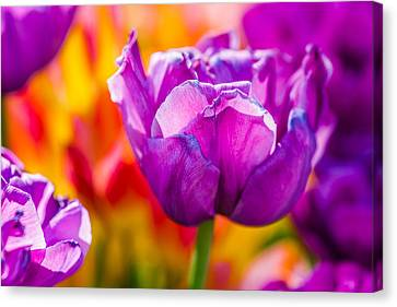 Canvas Print featuring the photograph Tulips Enchanting 43 by Alexander Senin