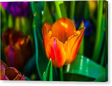 Canvas Print featuring the photograph Tulips Enchanting 44 by Alexander Senin