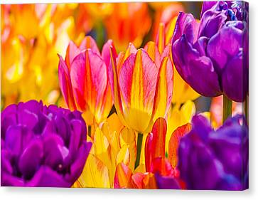 Canvas Print featuring the photograph Tulips Enchanting 45 by Alexander Senin