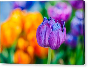 Canvas Print featuring the photograph Tulips Enchanting 46 by Alexander Senin