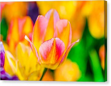 Canvas Print featuring the photograph Tulips Enchanting 48 by Alexander Senin