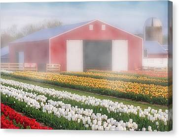 Canvas Print featuring the photograph Tulips, Fog And Barn by Susan Candelario