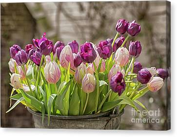 Canvas Print featuring the photograph Tulips In A Bucket by Patricia Hofmeester