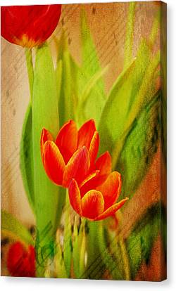 Tulips In Harmony Canvas Print by Mary Timman