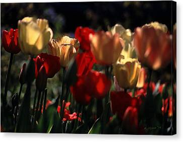 Canvas Print featuring the photograph Tulips In Morning Light by Michael Flood