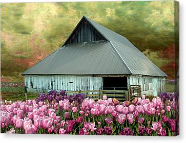 Tulips In Skagit Valley Canvas Print by Jeff Burgess