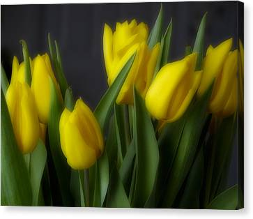 Floral Canvas Print - Tulips In The Kitchen by Ches Black