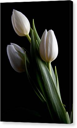 Tulips Iv Canvas Print by Tom Mc Nemar