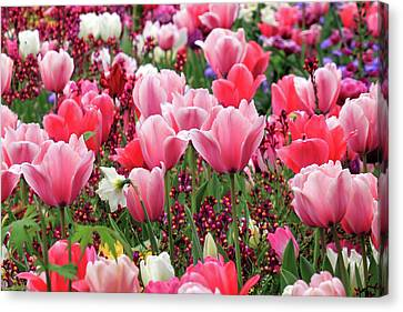 Canvas Print featuring the photograph Tulips by James Eddy
