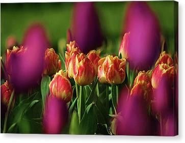 Tulips Canvas Print by Martina Fagan