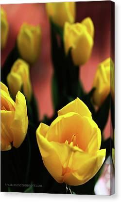Tulips Canvas Print by Matt Truiano