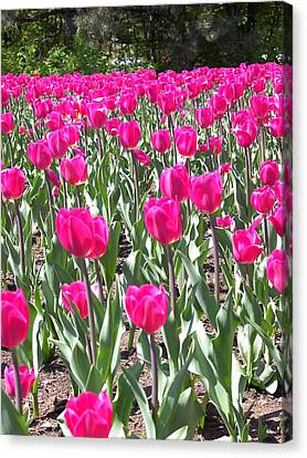 Canvas Print featuring the photograph Tulips by Mary-Lee Sanders