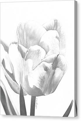 Tulips No. 1 Canvas Print