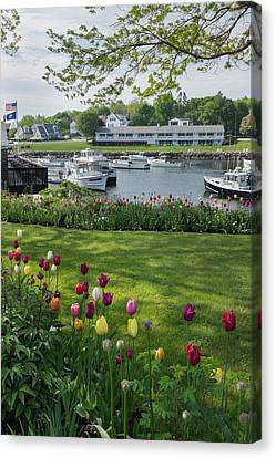 Tulips On Perkins Cove Canvas Print by Joseph Smith