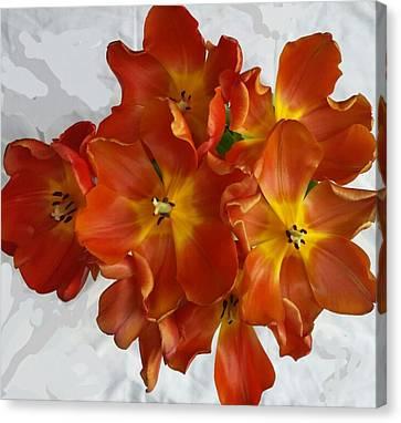 Tulips On White Canvas Print