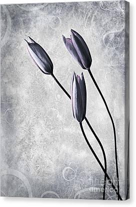 Tulips Canvas Print by Jacky Gerritsen