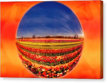 Canvas Print featuring the photograph Tulips Reflections And Refractions by Susan Candelario
