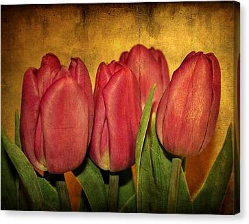 Tulips Standing Canvas Print by Cathie Tyler