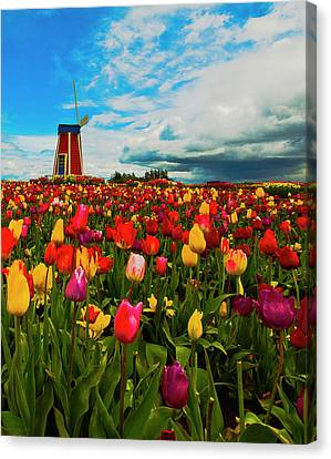 Tulips Windmill 2 Canvas Print by Dale Stillman