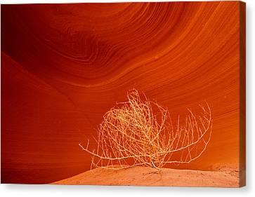 Tumbleweed Canvas Print by Eric Foltz