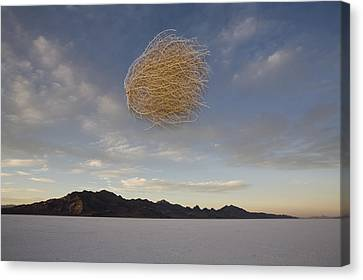 Tumbleweed In Mid Air Canvas Print by John Burcham
