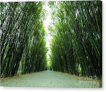 Canvas Print featuring the photograph Tunnel Bamboo Trees And Walkway. by Tosporn Preede