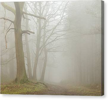Mystical Landscape Canvas Print - Tunnel by Chris Dale
