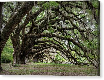 Canvas Print featuring the photograph Tunnel In Charleston by Jon Glaser