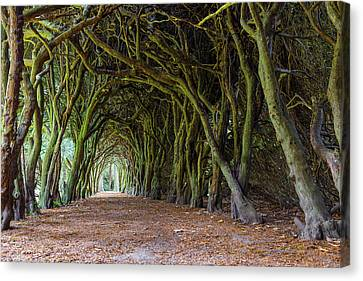Canvas Print featuring the photograph Tunnel Of Intertwined Yew Trees by Semmick Photo