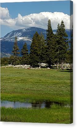 Tuolumne Meadows Rock And Mountains Of Yosemite Canvas Print by LeeAnn McLaneGoetz McLaneGoetzStudioLLCcom