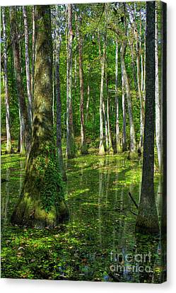 Tupelo Trees In Mississippi  Canvas Print by Larry Braun