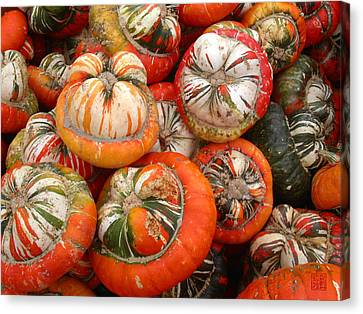 Turban Squash Canvas Print