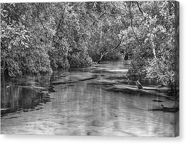 Turkey Creek In Black And White Canvas Print by JC Findley