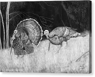 Turkey Strut Drawing Canvas Print