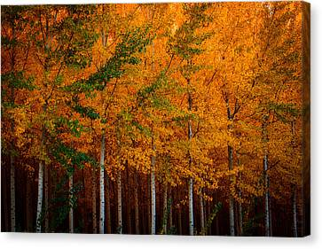 Canvas Print featuring the photograph Turning Into Gold by Dan Mihai