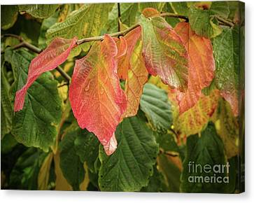 Canvas Print featuring the photograph Turning by Peggy Hughes