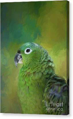 Turquoise-fronted Amazon Canvas Print