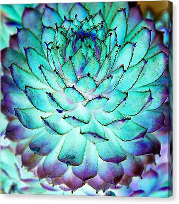 Canvas Print featuring the photograph Turquoise Succulent 1 by Marianne Dow