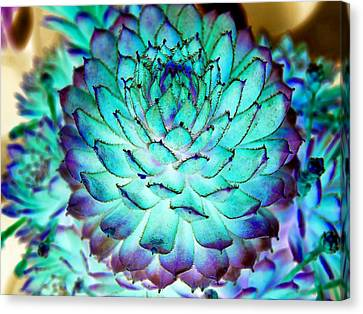 Canvas Print featuring the photograph Turquoise Succulent 2 by Marianne Dow