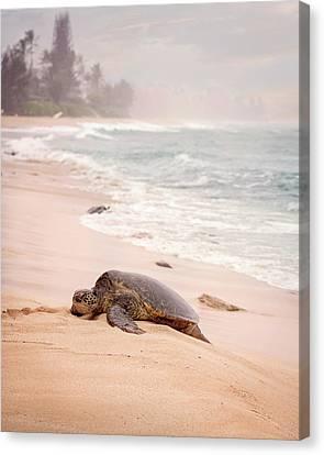 Turtle Beach Canvas Print by Heather Applegate