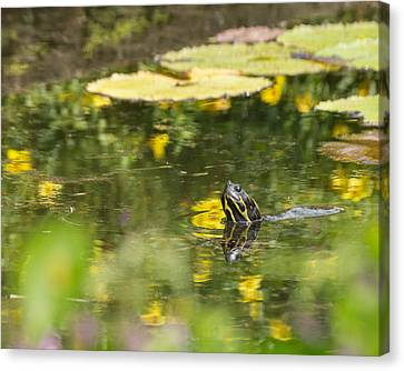 Canvas Print featuring the photograph Turtle  by Julie Andel