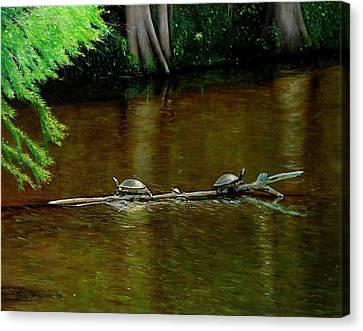 Turtle Log Spa Canvas Print by Doug Strickland