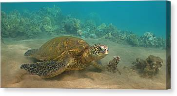 Turtle Magic Canvas Print by Brian Governale