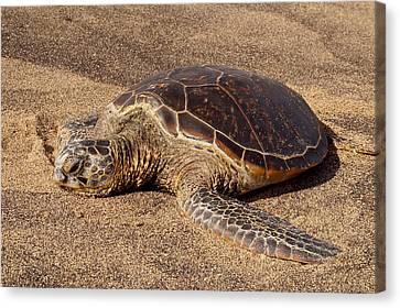 Key West Florida Hoodie Sea Turtle Shell Shirt